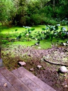 AudubonSocietyPortland. MomsicleBlog