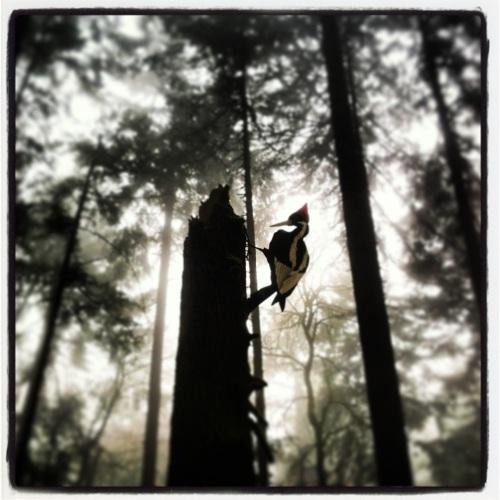 Forest Park Portland. MomsicleBlog