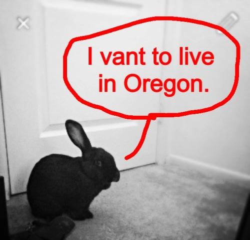 Bunny. MomsicleBlog
