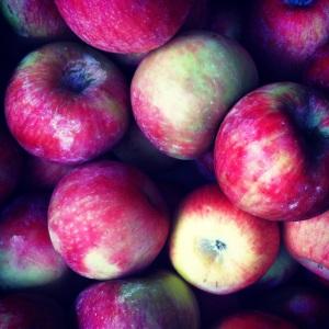 Organic Oregon Apples. MomsicleBlog